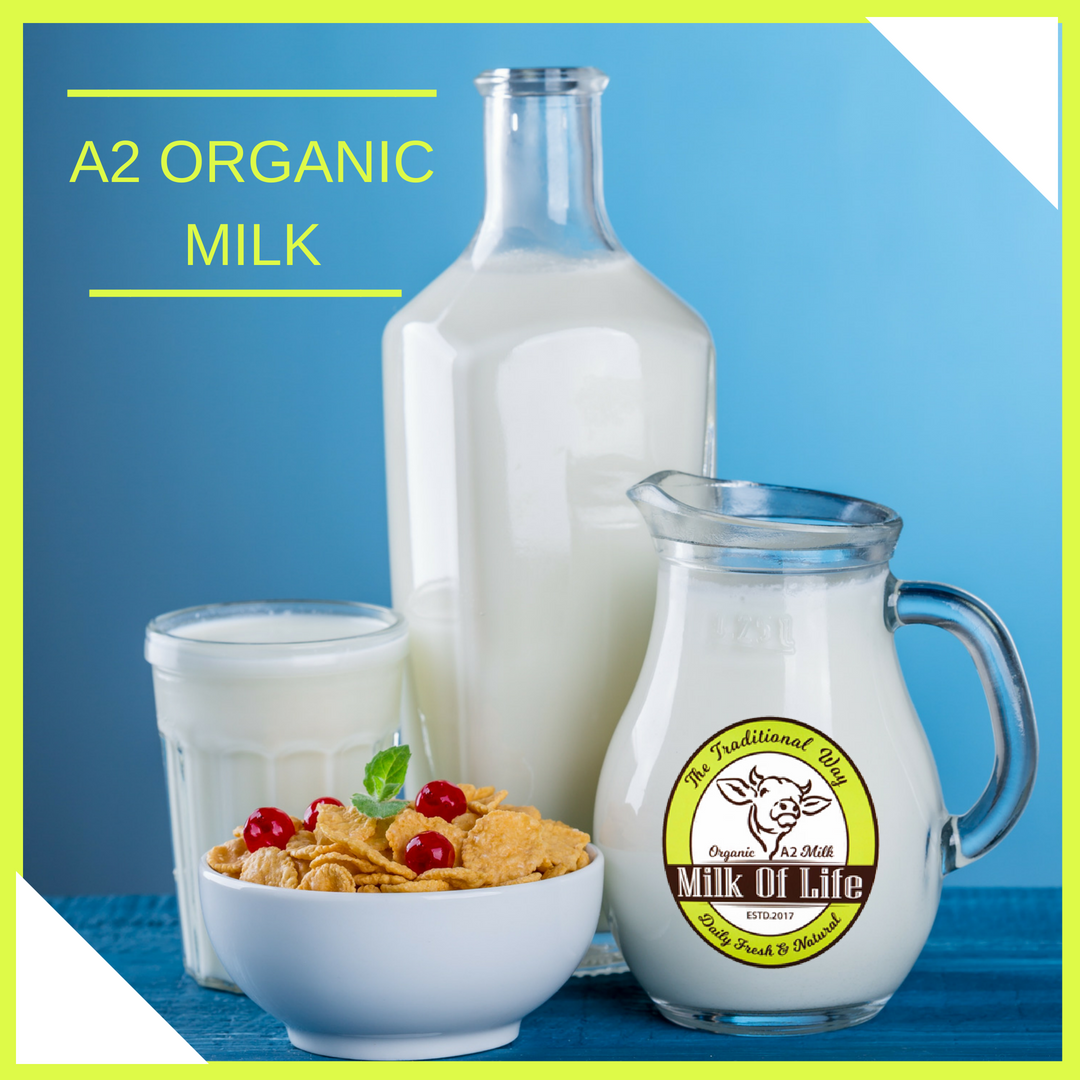 A2 Milk Is Beneficial To Everyone Whether He She A Senior Citizen Or Even Child Because Easily Digestible Every Age Of Person