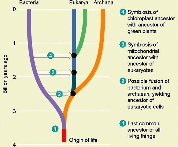 relationship between eukarya bacteria archaea similarities