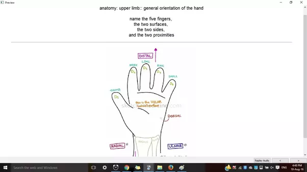 What Is The Best Way To Study Human Anatomy In 1st Year Mbbs Quora