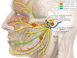 Bump in ear causing pain dating