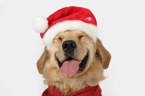 christmas dog treat recipes homemade festive treats with turkey