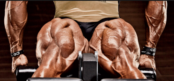 How to get more muscular and thicker legs - Quora