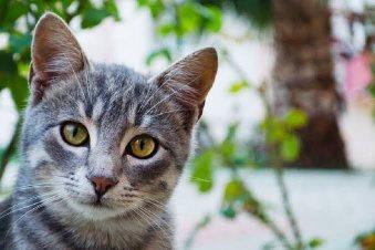 Bagaimana Kita Dapat Mengetahui Umur Kucing Kucing Jalanan 2020 Quora