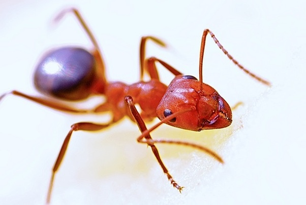 How to get rid of ants coming out of the bathtub water ...