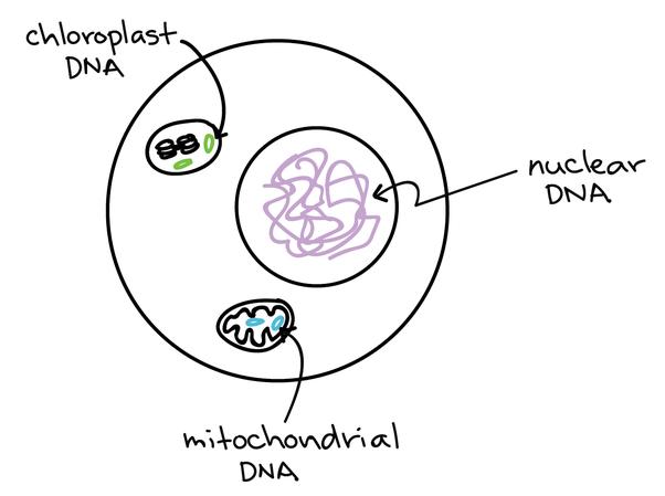 where are genes located
