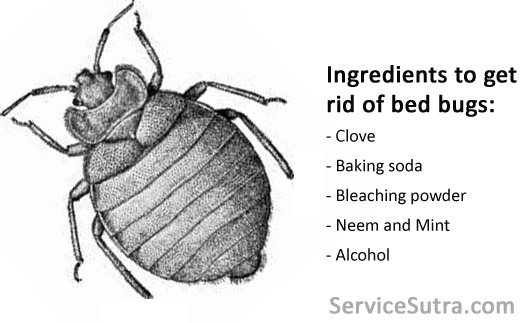 How Much Does Bedbug Treatment Cost In India?