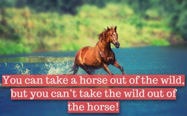 What are some famous horse quotes and sayings? - Quora