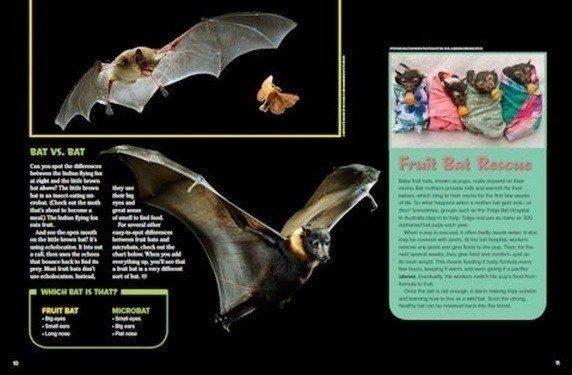 Come possono vedere i pipistrelli di notte?