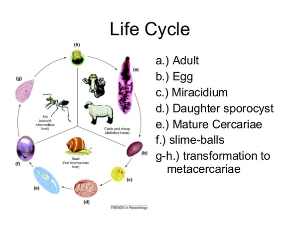 What Animal Has The Weirdest Life Cycle Quora