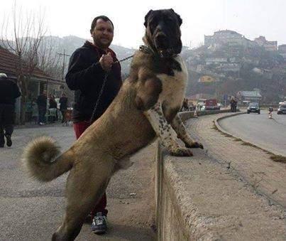 What Dog Has The Strongest Bite Quora