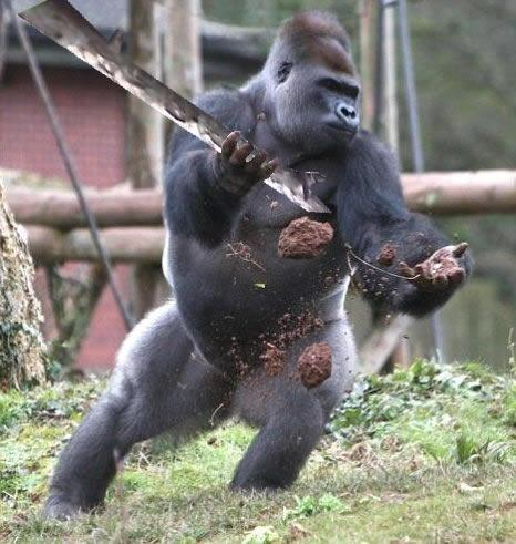 What animal could kill a gorilla? - Quora