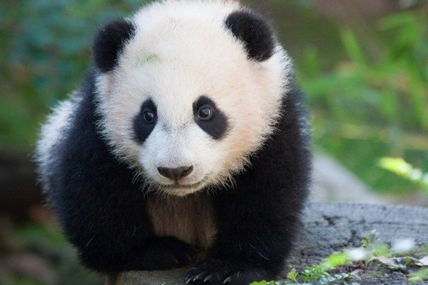 What Are Some Of The Most Popular Animals Of Asia Quora