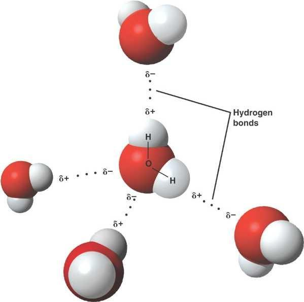 How Many Hydrogen Bonds Are Attached To Each Water Molecule In A