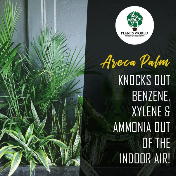 Which plant can be used to remove Xylene from indoor air? - Quora