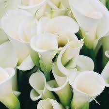 List Of Synonyms And Antonyms Of The Word Kinds Of White Roses