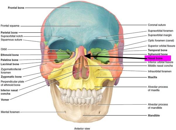 How to fix a bent nose bone - Quora