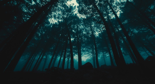 Forrest at night.