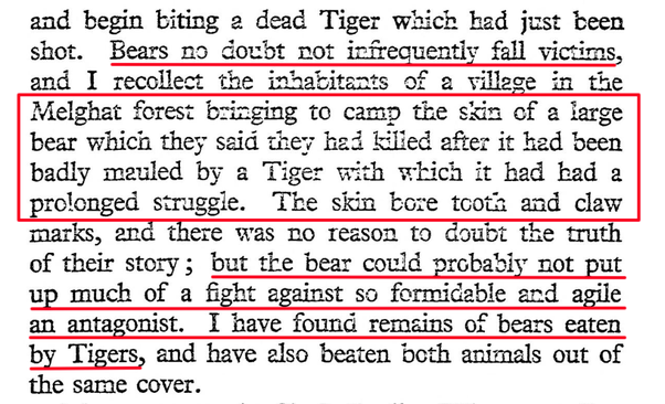Do tigers really eat bears? How are they able to kill such