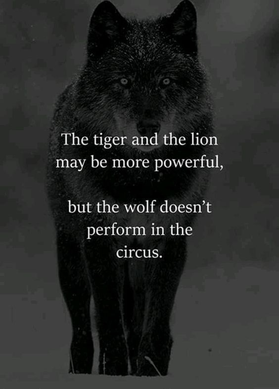 Wolf Quotes   What Are Some Quotes And Poems About Wolves Quora