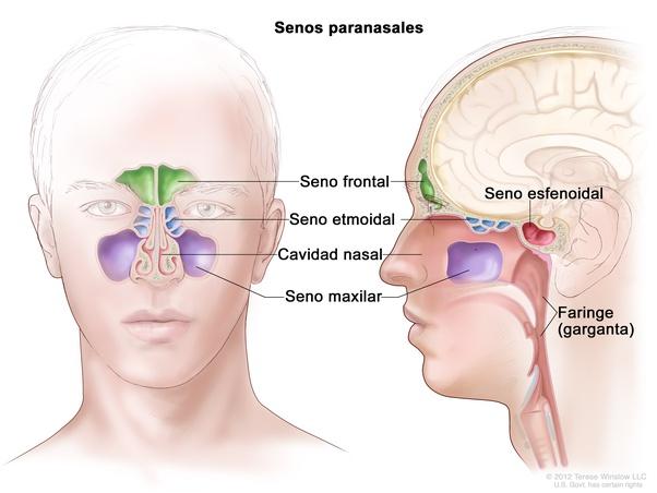الشعور بألم في نصف الوجه الأيمن مع ألم في الأذن اليمنى مع التهاب الحلق مع ظهور حبوب في اللسان ما تفسيرك لهذا Quora