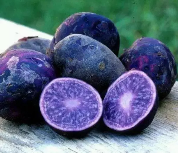 Purple Mountain Natural Foods