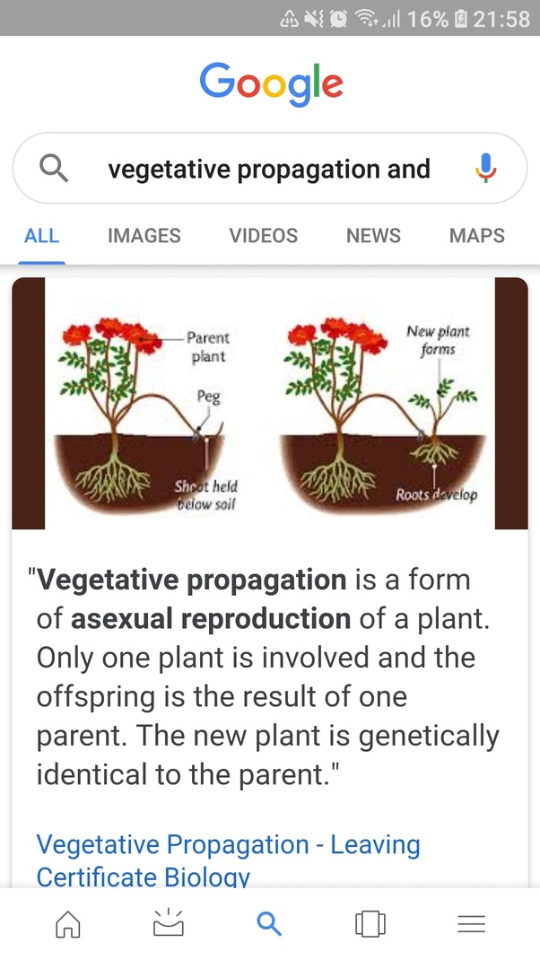 Difference between vegetative and asexual reproduction