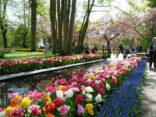 Keukenhof Is Open Annually From Mid March To Mid May. The Best Time To View  The Tulips Is Around Mid April, Depending On The Weather.