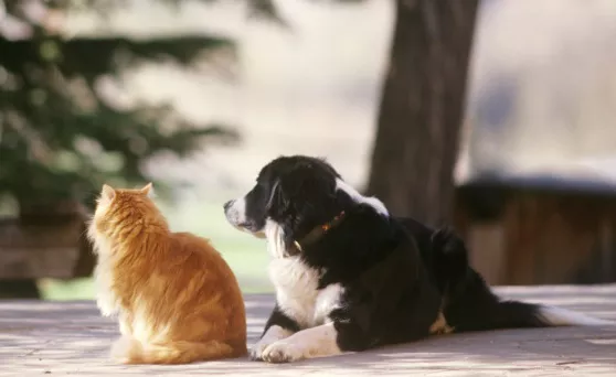 In your opinion, are cats or dogs better? Why? - Quora