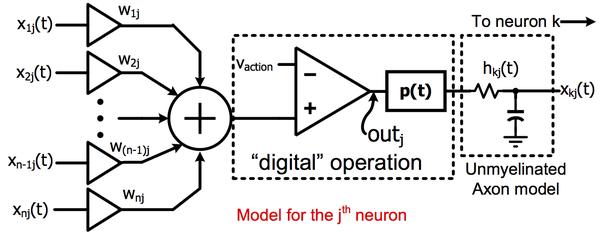 is the human brain analog or digital