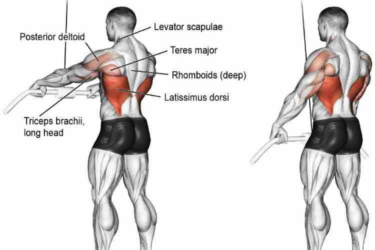 Straight-arm cable pull-downs, back workout for a beginner