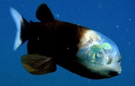 how can fishes which lives in deep water survive the pressure quora