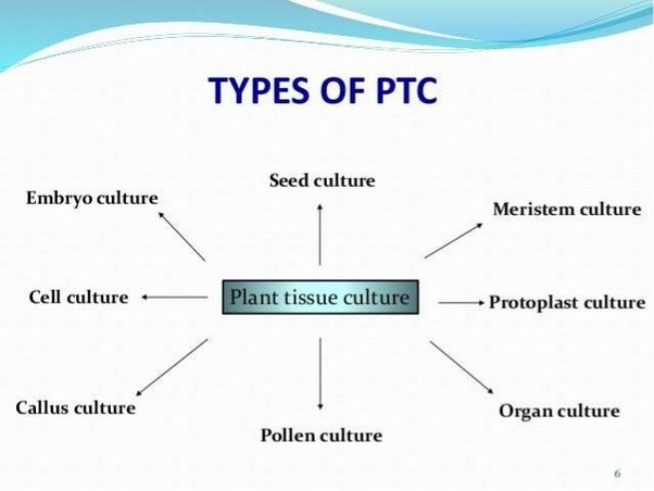 What Is The Plant Tissue Culture And Its Applications Quora