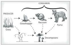 What are the different types of consumers in biology? - Quora