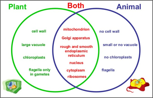 Venn diagram compare animal and plant cell structures wiring library venn diagram compare animal and plant cell structures images gallery ccuart Gallery