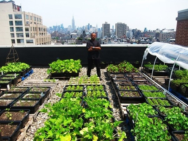 How To Grow A Roof Top Kitchen Garden Quora
