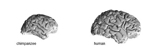 If the difference in DNA between humans and chimps is 1