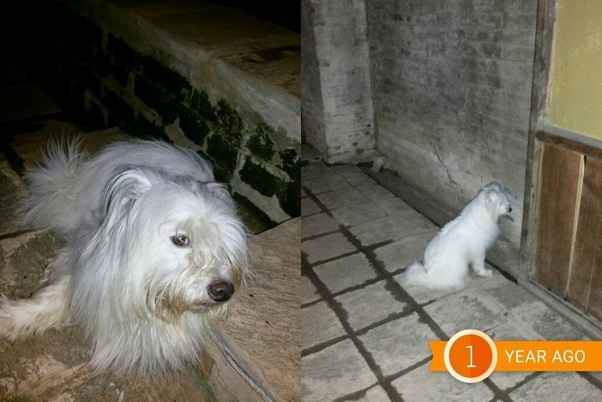 Beautiful Unknown Chubby Adorable Dog - main-qimg-9ab416c78b9486a213c29f9b9229e77f-c  Snapshot_19121  .net/main-qimg-9ab416c78b9486a213c29f9b9229e77f-c