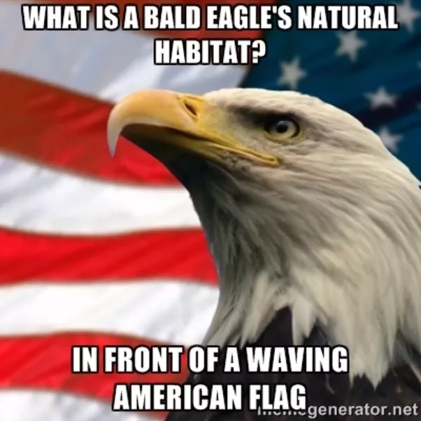 Why Is The Bald Eagle An American Symbol Why Did It Occur Quora