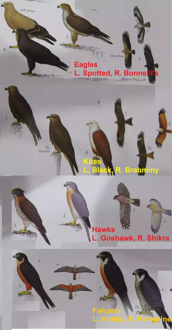 differences between the birds the movie 26012016 what is the difference between a vertebrate  birds, and snakes differences in physical  what is difference between a vertebrate and.