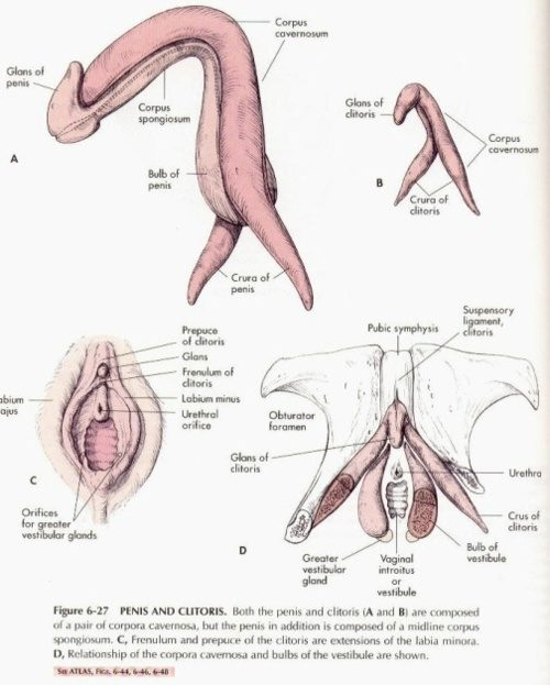 Do women cum from thier clitoris