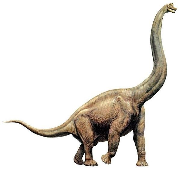 How did a brontosaurus differ from a brachiosaurus? - Quora