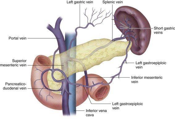 Left Portal Vein Diagram - Block And Schematic Diagrams •