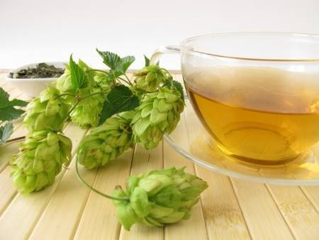 Do hops have any use other than for beer? - Quora