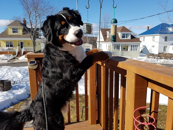 What Is The Best Way To Take Care Of A Cold Weather Dog