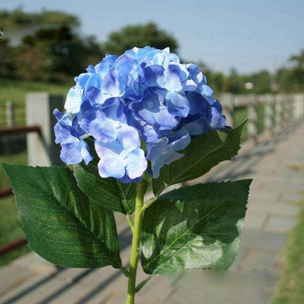What are some good ideas for a one flower bouquet? - Quora
