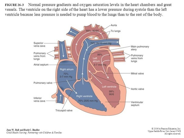 What Is The Function Of The Two Upper Chambers Of The Heart Quora