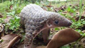 10 जानवर जो आने वाले 10 सालों में धरती से गायब हो सकते हैं