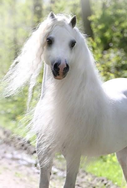 Which Types Of Horses Have Long Manes And Tails