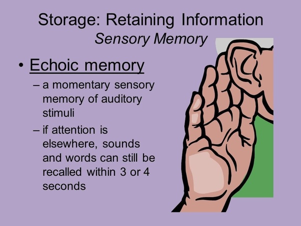 Is Echoic Memory Common Quora