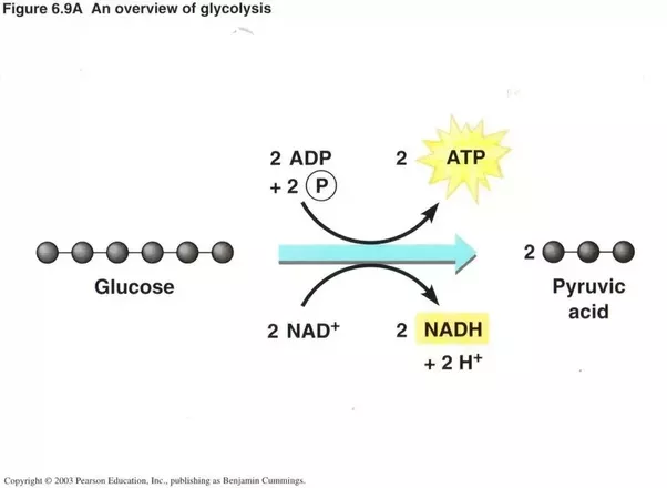 What are the formulae of glycolysis quora ccuart Choice Image